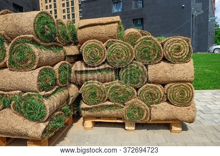 Pallets With Sod Turf Grass. The Stacked Fresh Sod Rolls For New Grass Lawn In Residential Area.