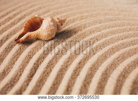Big Beautiful Antique Seashell On Sand Background. Place For Text. Textured Wavy Sand.