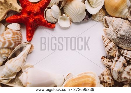 Beautiful Seashells And Starfish Lie On A White Background Forming A Frame. Place For Text.