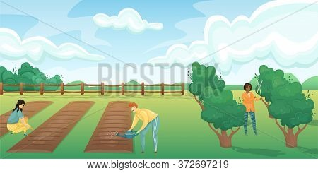 Horizontal Landscape Of A Field With Beds And A Fruit And Berry Garden. People Take Care Of Planting