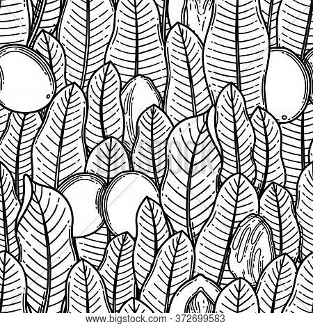 Seamless Pattern Of Graphic Shea Plants. Vector Design