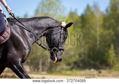 Beautiful Head Of A Horse On Manege
