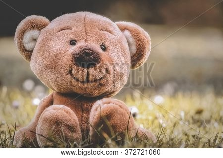 Soft Teddy Bear In A Meadow Close-up.