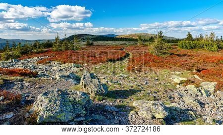 Colorful Red Blueberry Bushes With Path Leading Through It On A Mountain Ridge, Jeseniky, Czech Repu