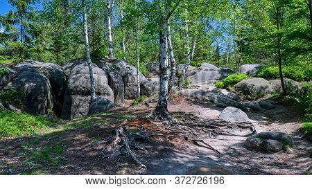 Enlightened Birch Tree Roots Surrounded By Huge Rocks In A Forest, Nature Tourism Destination - Adrs