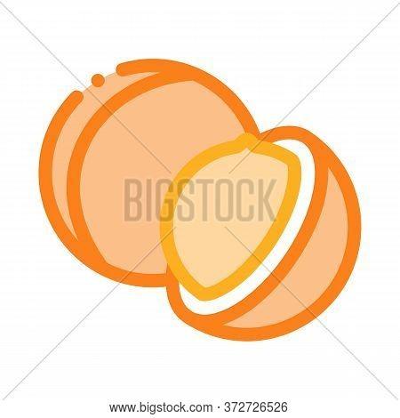 Macadamia Nut Icon Vector. Macadamia Nut Sign. Color Symbol Illustration