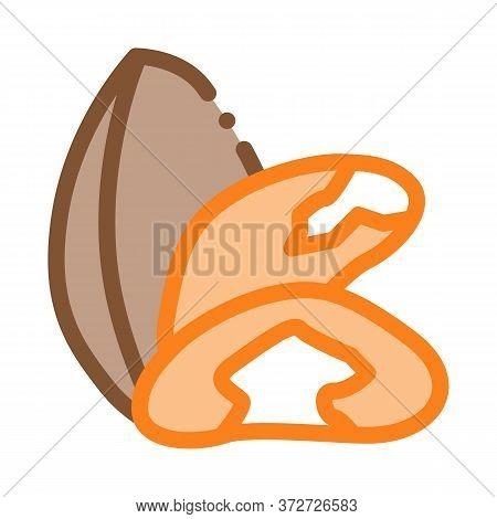 Brazil Nut Icon Vector. Brazil Nut Sign. Color Symbol Illustration