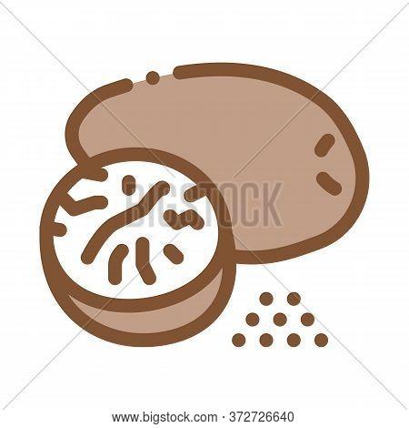 Nutmeg Nut Icon Vector. Nutmeg Nut Sign. Color Symbol Illustration