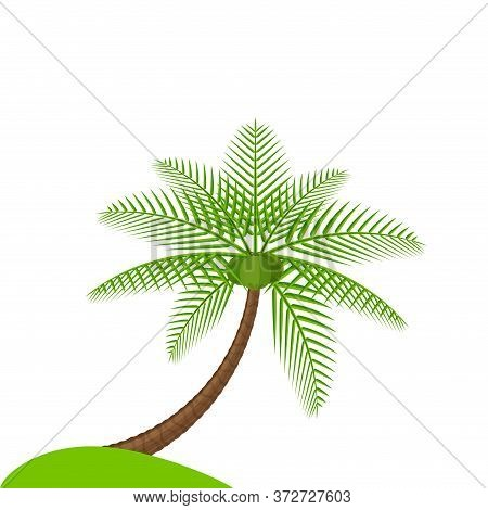 Coconut Tree Simple Isolated On White, Illustration Coconut Palm Tree