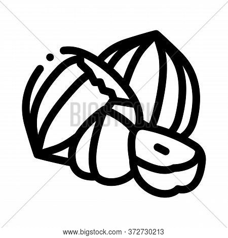 Hazelnut Nut Icon Vector. Hazelnut Nut Sign. Isolated Contour Symbol Illustration