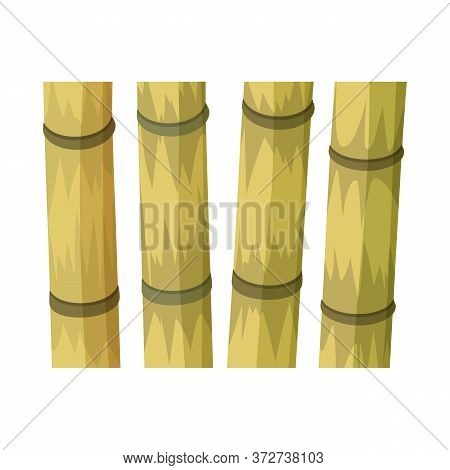 Isolated Object Of Cane And Sugar Sign. Web Element Of Cane And Plant Vector Icon For Stock.