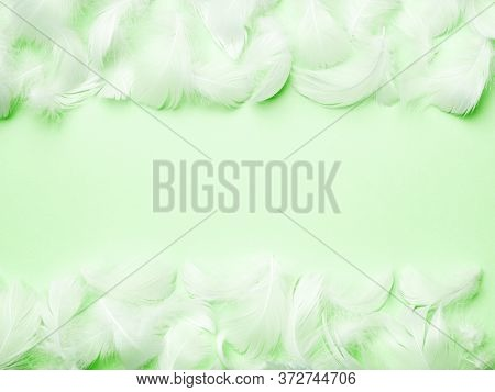 Frame With Soft Airy Feathers On Pastel Mint Green Background. Pureness, Softness Concept. Abstract