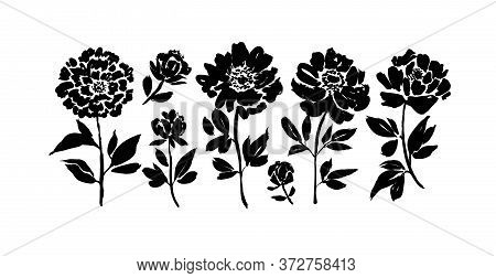 Peony And Anemones Hand Drawn Paint Vector Set. Ink Drawing Flowers And Plants, Monochrome Artistic