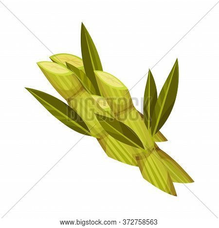 Sugarcane As Agricultural Crop For Extraction To Make Refined Sugar Vector Illustration