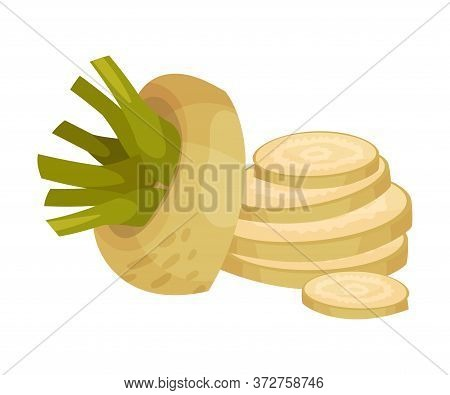 Sliced Sugar Beet As Agricultural Crop For Extraction To Make Refined Sugar Vector Illustration
