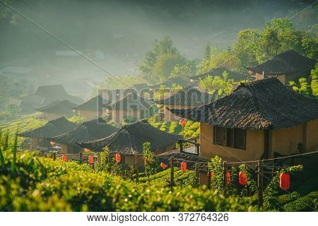 Rak Thai Village Tea Plantation On Nature In The Morning Fresh Air Mountains Sunlight Background In