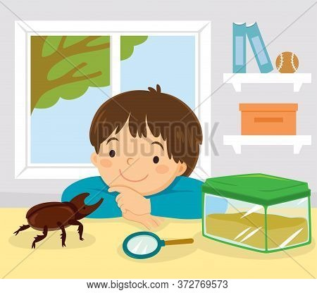 Pet Stag Beetle, Japanese Rhinoceros Beetle Or Japanese Horned Beetle. Little Kid Playing With His P