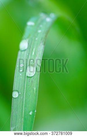 closeup image of raindrops on grass