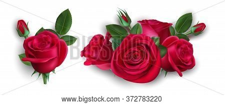 Realistic Bouquet Of Roses. Isolated Red Rose With Leaves. Wedding Boutonniere, Floral Decorative El