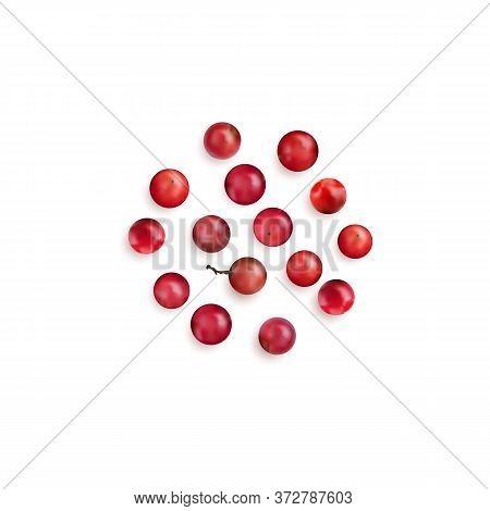 Red Peppercorn Seeds Or Pink Pepper Corns   Illustration