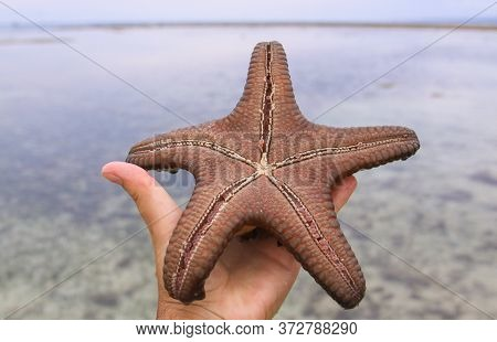 Sea Star In Hand In Tropical Water At Low Tide, On Gili Air Island, West Nusa Tenggara, Indonesia