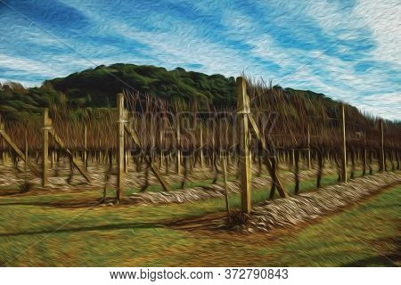 Landscape With Some Rows Of Leafless Vine Trunks And Branches In Winter Near Bento Goncalves. A Frie