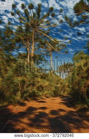 Dirt Pathway In A Forest With Pine Trees At Aparados Da Serra National Park, Near Cambara Do Sul. A