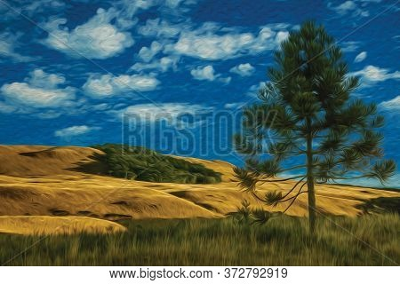 Pine Tree On Shadow In Rural Lowlands Called Pampas At Sunset Near Cambara Do Sul. A Small Country T