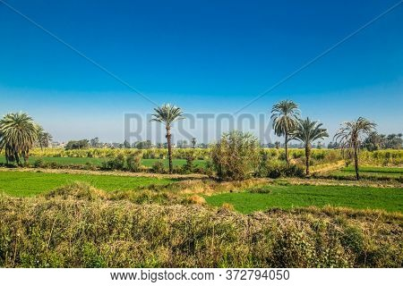 Egyptian cantryside near the Nile irrigation canal . Green landscape,  palm trees  in the Nile Valley. Egypt.