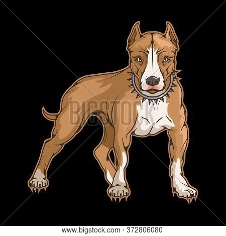 Illustration Of A Pit Bull. Dog For Tattoo Or T-shirt Print. American Pit Bull Terrier Illustration