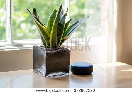 London, United Kingdom - May 2020: Amazon Echo Dot, The Virtual Assistant Speaker, In A Beautifully
