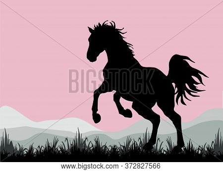Dark Silhouette Of A Wild Horse Galloping Against The Sky,  Isolated  Color Image