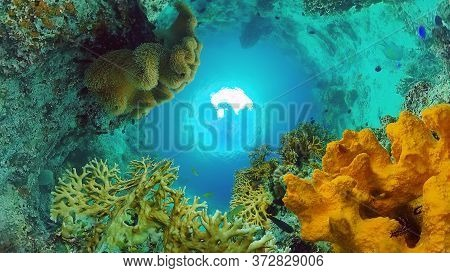 Underwater Fish Reef Marine. Tropical Colorful Underwater Seascape With Coral Reef. Panglao, Bohol,