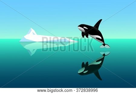 Black Young Killer Whale Jumps Out Of The Water, Seascape With White Iceberg, Specular Water Surface