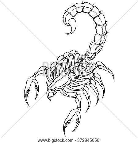 Coloring Book Scorpion On A White Background. Vector Illustration.