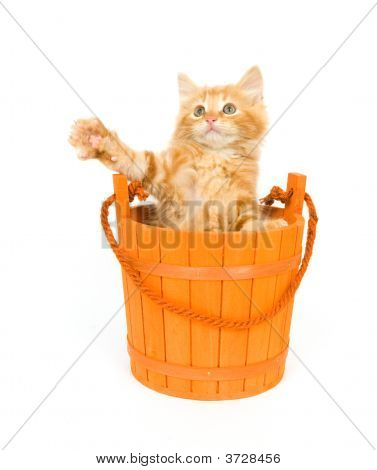 A yellow kitten sits inside of an orange barrel that is used for Halloween decorations poster