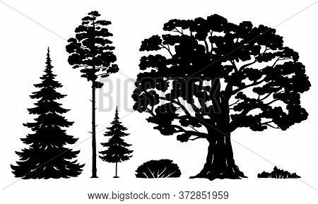 Set Of Forest Trees And Bushes Isolated Silhouettes, Green Tall Spruce Tree, Green Tall Pine Tree, W