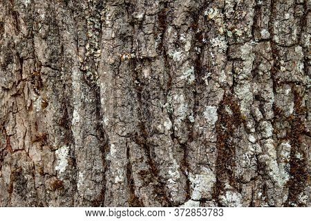 Texture Of A Tree Bark. High Quality Photo