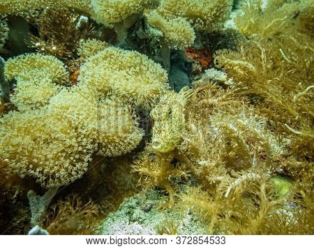 Filefish (monacanthidae), Also Known As Foolfish, Leatherjackets Or Shingles. Filefish Are A  Divers
