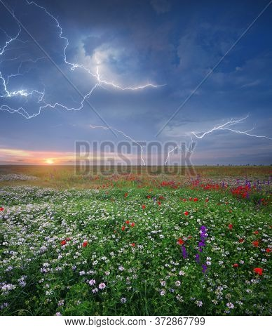 Spring flowers in meadow during sunset. Beautiful landscapes. rainy weather. Lightning stroke in sky. Nature composition.