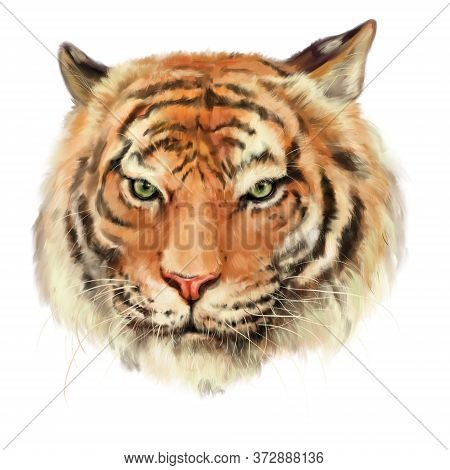 A High Quality Digital Painting Of A Royal Bengal Tiger. It Might Be Useful For Any Project/print/we