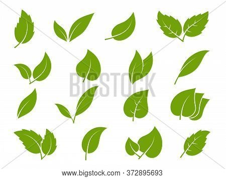 Leaves Icons. Young Green Leaves Trees And Plants Various Elegance Shapes, Herbal Tea Leaf Eco, Bio