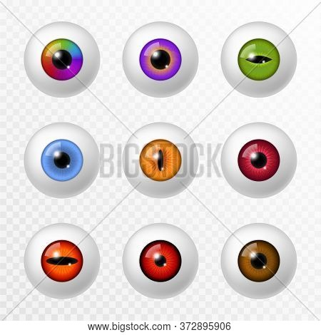 Human And Animal Eye. Different Realistic Color Eyeball And Lenses, Various Round Iris Retina And Pu