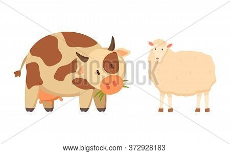 Cow And Sheep Isolated Cartoon Style Animals. Vector Spotted Young Bovine Calf And White Lamb Or Mut