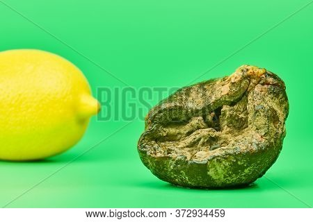 Rotten Lemon And Fresh Lemon Compare, Green Background. Mold Putrefied Fruit. Unsuitable Inedible Fo