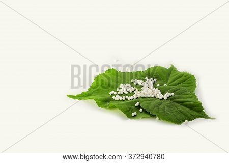 Homeopathic Globules (pills) On Green Plant Leaf On White Background. The Concept Of Healthcare And