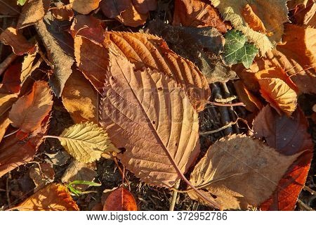 Fallen leaves on the ground in the woods