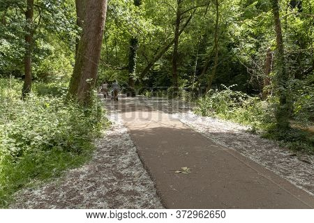 Bristol-june-2020-england-a Walkway Thought The Forest At Snuff Miles In Bristol