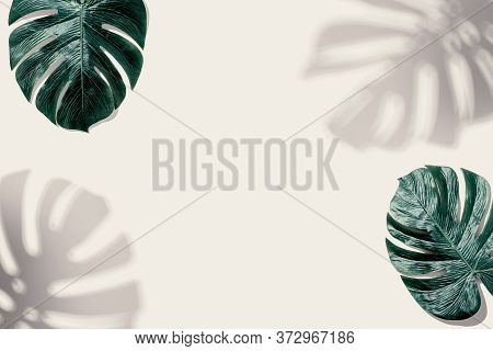 Tropical Monstera Leaf With Shadow - Flat Lay