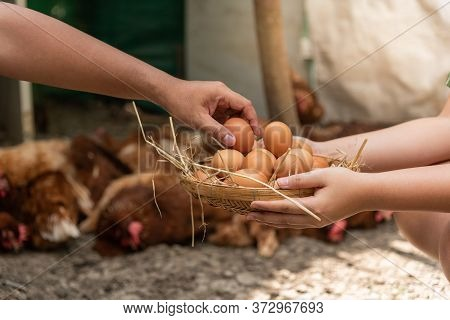 Farmer Are Helping To Collect Fresh Egg Products Put On A Bamboo Basket Which Has A Hay Foundation W